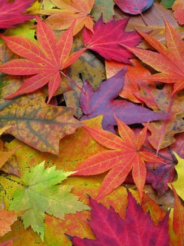 autumn درباره پاییز