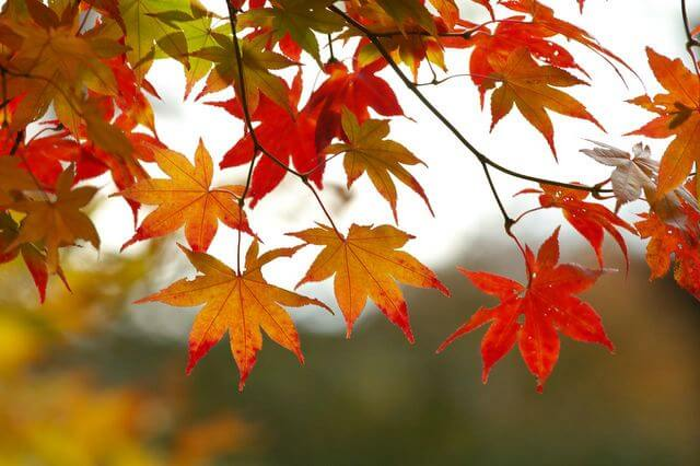 autumn فصل پاییز